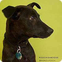 Adopt A Pet :: Wendy - Jenkintown, PA