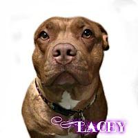 Adopt A Pet :: Lacey - Des Moines, IA