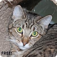 Adopt A Pet :: Maddie - Walnut Creek, CA