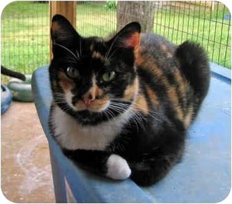 Calico Cat for adoption in McDonough, Georgia - Barbara