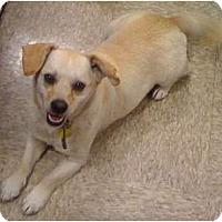 Adopt A Pet :: Duke - Fowler, CA