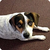 Adopt A Pet :: Hershey - Indianapolis, IN