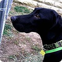 Adopt A Pet :: Slim Jim - Fort Riley, KS