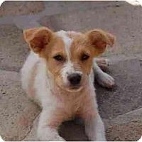 Adopt A Pet :: Alfie - Chula Vista, CA