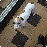 Adopt A Pet :: Blake - Wisconsin Dells, WI