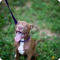 Adopt A Pet :: Fabio - Reisterstown, MD