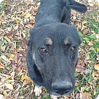 Adopt A Pet :: Sheba - Kendall, NY