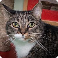 Adopt A Pet :: Beatrice - New York, NY