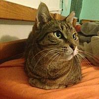 Adopt A Pet :: zz- Crackerjack (and Nala) (courtesy listing) - West Palm Beach, FL