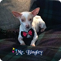 Adopt A Pet :: Bingley - Barriere, BC