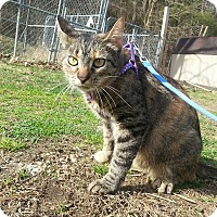 Adopt A Pet :: MJ - Shinnston, WV