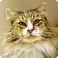 Adopt A Pet :: Kristofferson - Denver, CO