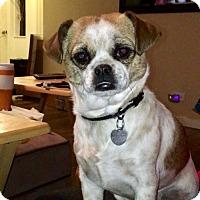 Adopt A Pet :: Princess 3 Years - C/S & Denver Metro, CO