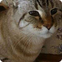 Adopt A Pet :: Mr. Jak - Witter, AR