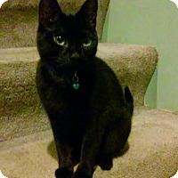 Adopt A Pet :: Mindy - Ellicott City, MD