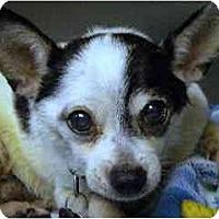 Adopt A Pet :: Spot - Washington, NC