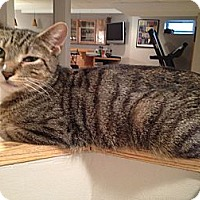 Adopt A Pet :: Savannah-Affectionate - East Hanover, NJ