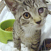 Adopt A Pet :: Stacey - Germansville, PA