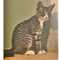 Adopt A Pet :: Pinky - Colorado Springs, CO