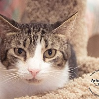 Adopt A Pet :: Aiden - Belton, MO