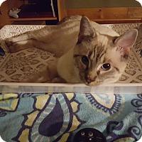 Adopt A Pet :: Simon - Chesterfield, VA