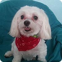 Adopt A Pet :: Mitchell - Ruskin, FL