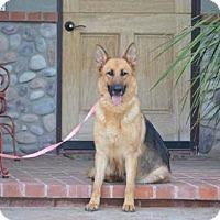 Adopt A Pet :: Carly - Downey, CA