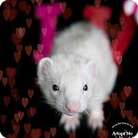 Adopt A Pet :: Frankie - Hartford, CT