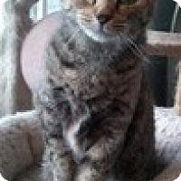 Adopt A Pet :: Tilley - Anchorage, AK