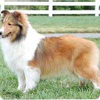 Adopt A Pet :: Jill - Alderson, WV