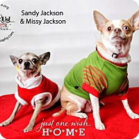 Adopt A Pet :: Sandy Jackson - Shawnee Mission, KS