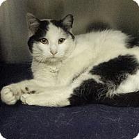 Adopt A Pet :: Jimmy Fallon - Richboro, PA