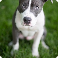 Adopt A Pet :: Rico - Reisterstown, MD
