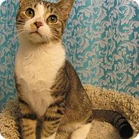 Adopt A Pet :: Ferris - Covington, KY
