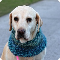 Adopt A Pet :: Charlie *sight impaired - Los Angeles, CA