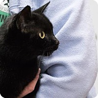 Adopt A Pet :: EBBY - Terre Haute, IN