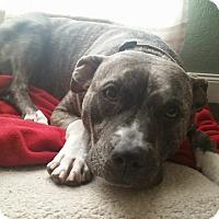 Adopt A Pet :: Sookie - Broken Arrow, OK