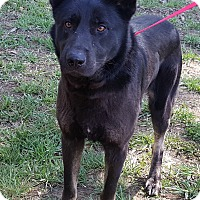 Adopt A Pet :: Recon - Colonial Heights, VA