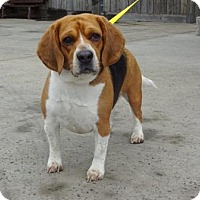 Adopt A Pet :: Rocky - Lathrop, CA