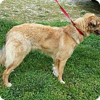 Adopt A Pet :: Daisy - Crocker, MO