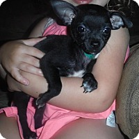 Adopt A Pet :: Raisin - Orlando, FL