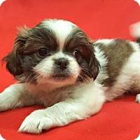 Adopt A Pet :: Anna - Modesto, CA