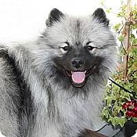 Adopt A Pet :: Mason - Los Altos, CA