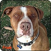 Adopt A Pet :: Frank - West Hills, CA