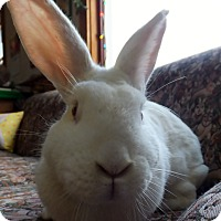 Adopt A Pet :: Miss Lily - Foster, RI
