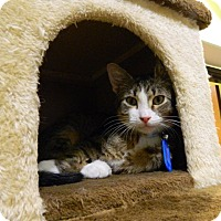 Adopt A Pet :: Waffles - The Colony, TX