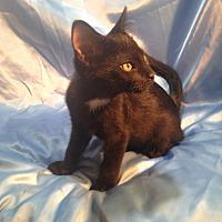 Adopt A Pet :: Jorge - Sarasota, FL