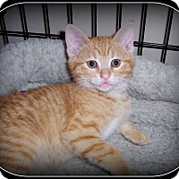 Adopt A Pet :: Jerry - South Plainfield, NJ