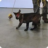 Adopt A Pet :: Dex - Greeneville, TN