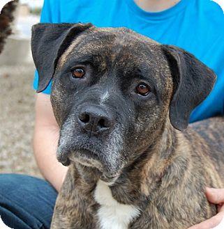 Boxer Mix Dog for adoption in Las Vegas, Nevada - Pandora